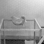 kippentafel-3159